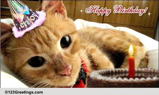 Happy Birthday Kitty Free Pets ECards Greeting Cards 123 Greetings