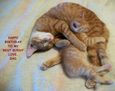 Birthday Cat For Your Son Free For Son Amp Daughter ECards 123 Greetings