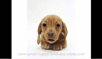 Puppy Dog Birthday Video Song Free Birthday Wishes ECards 123 Greetings