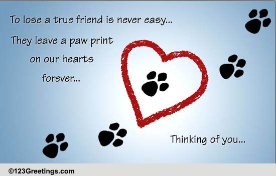 Pets Loss Of Pet Cards Free Pets Loss Of Pet Wishes