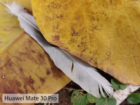 Huawei Mate 30 Pro Macro Dia 01