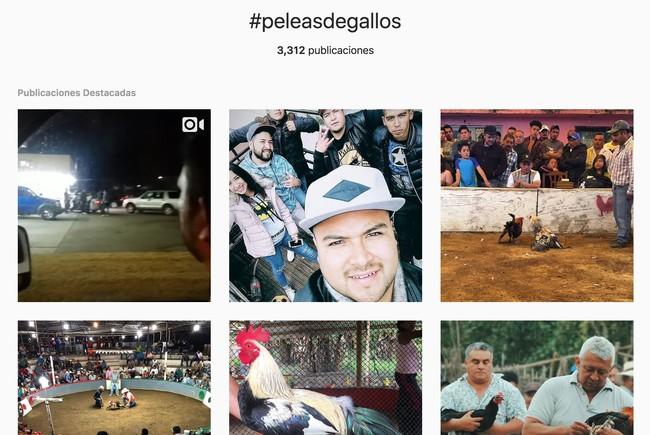 Window Y Peleasdegallos O Fotos Y Videos De Instagram