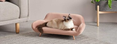 The best furniture and accessories for cats