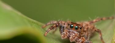 Así funcionan las nuevas arañas que pretenden indexar la Deep Web