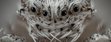 Un fascinante y desconocido mundo microscópico en las 20 fotomicrografías ganadoras del concurso Nikon Small World 2019