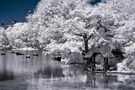 Lago Central Park primavera cerezos