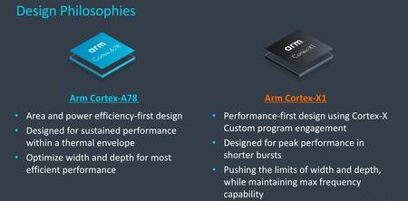 Cortex2