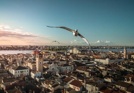 59151 - Alvise Bagagiolo - Angry seagull