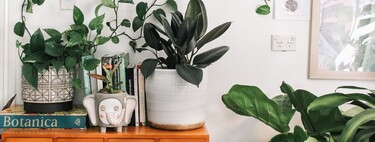 The 11 best houseplants: hardy, easy to care for, and gorgeous