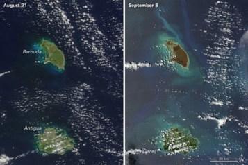 Barbuda Amo 2017251