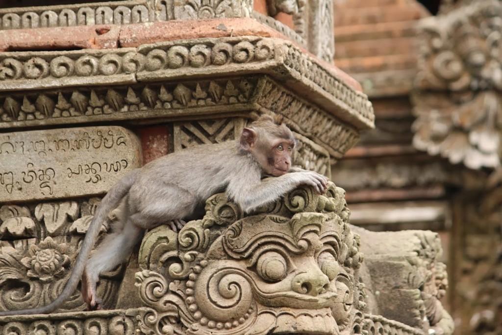Templo Monos De Ubud
