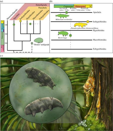 Tardigrado Fosil Resumen