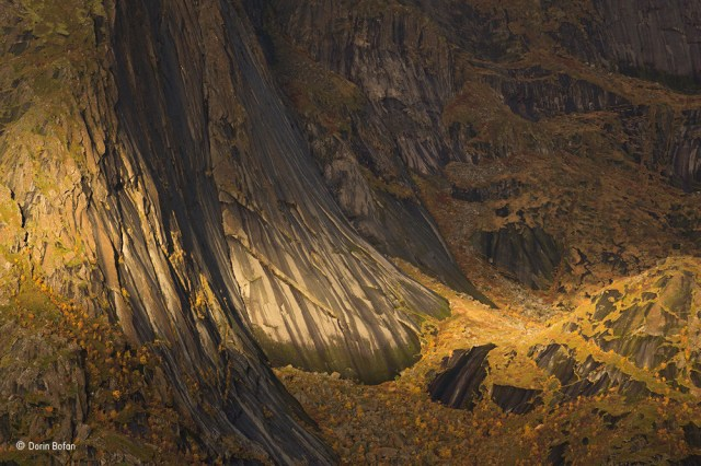 Tapestry Of Life Dorin Bofan Wildlife Photographer Of The
