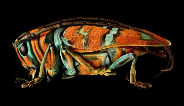 Microsculpture Levon Biss 01