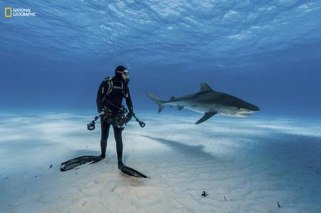 Tiger Shark Diver