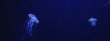 Quién habita las fosas de las Marianas, lo más parecido al infierno en el mar