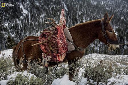 Horse Elk Meat