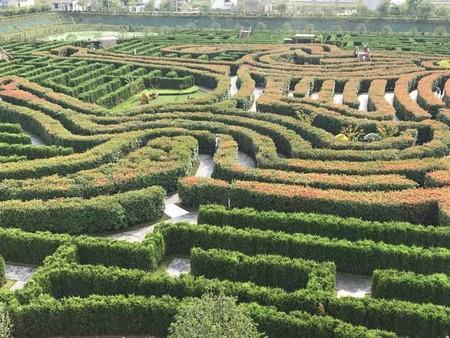 Hedge Maze 1 Tcm25 533830