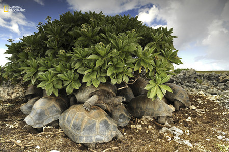Cave Dwelling Giant Tortoises