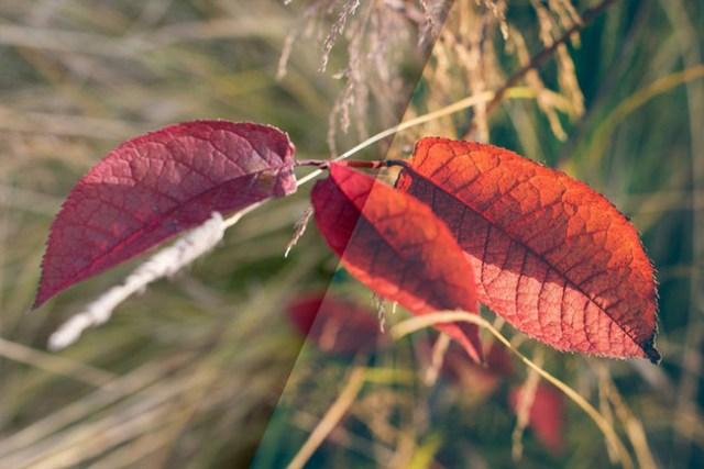 Vintage Autumn Colors Lr Presets 1