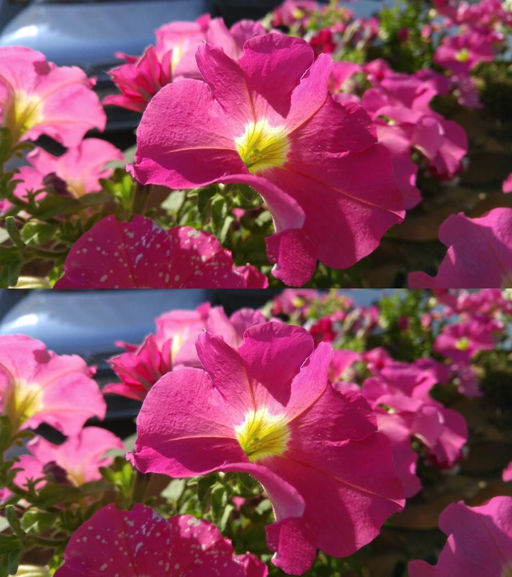 Flor Original Copia