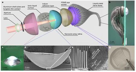 Oeil artificiel: structure et micrographies