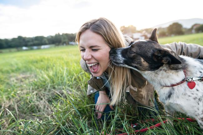 perro-mascota-salud