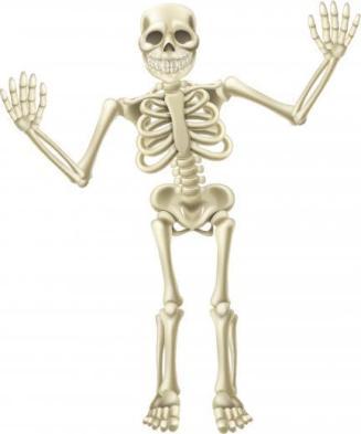 Resultado de imagen de huesos