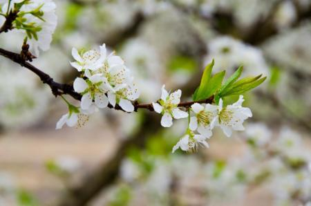 Floracion 12 1
