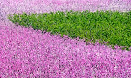 Floracion 30