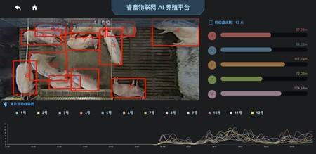 China Cerdos Reconocimiento Facial 1
