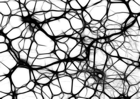Neurons 440660 1280