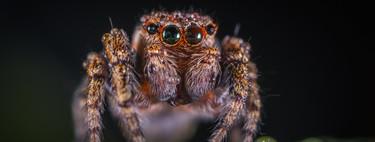 Casi todas las curiosidades que hay que saber sobre las arañas en un solo artículo