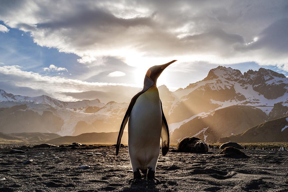 Linux Mint, Firefox, Signal y GIMP entre los programas y distros mejor valorados por la comunidad Linux