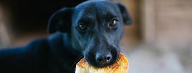 Un 9% de tus ingresos mensuales: el coste de tener perro para el sueldo más habitual de España