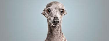 Guía de fotografía de mascotas: ideas y consejos esenciales para hacer mejores fotos a tu perro o gato