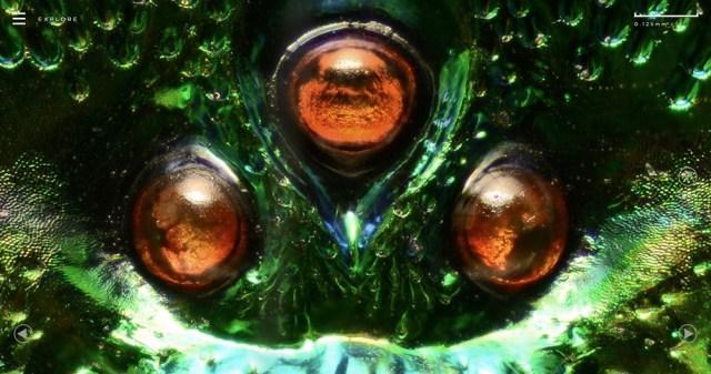 Microsculpture Levon Biss 02b