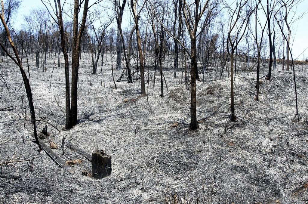 La 1ª operadora de enjambres de drones de EE.UU se dedica a la reforestación de bosques destruidos por el fuego