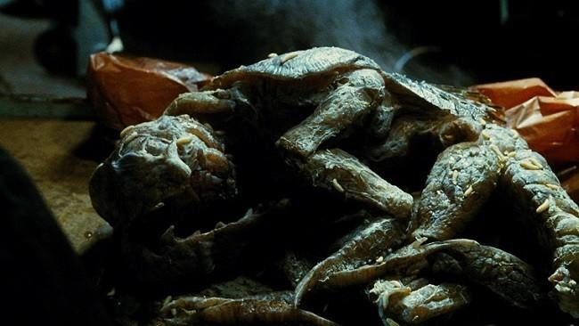 Las cucarachas humanoides