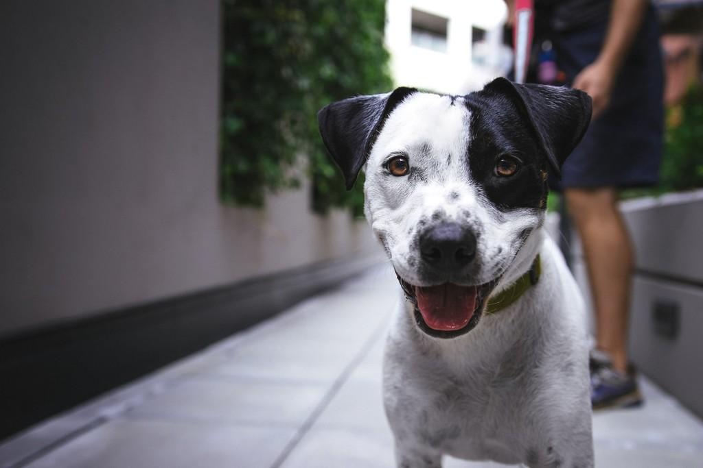 Si tienes un perro, probablemente tengas mejor salud cardiovascular que quien no tiene mascotas