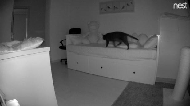 Captura Nest 2