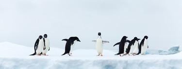 31 distribuciones Linux para elegir bien la que más necesitas