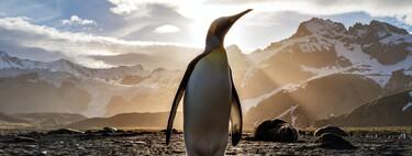 Qué es Linux y cómo funciona