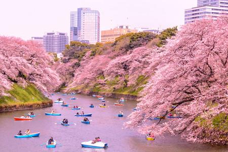 Cerezos Tokyo