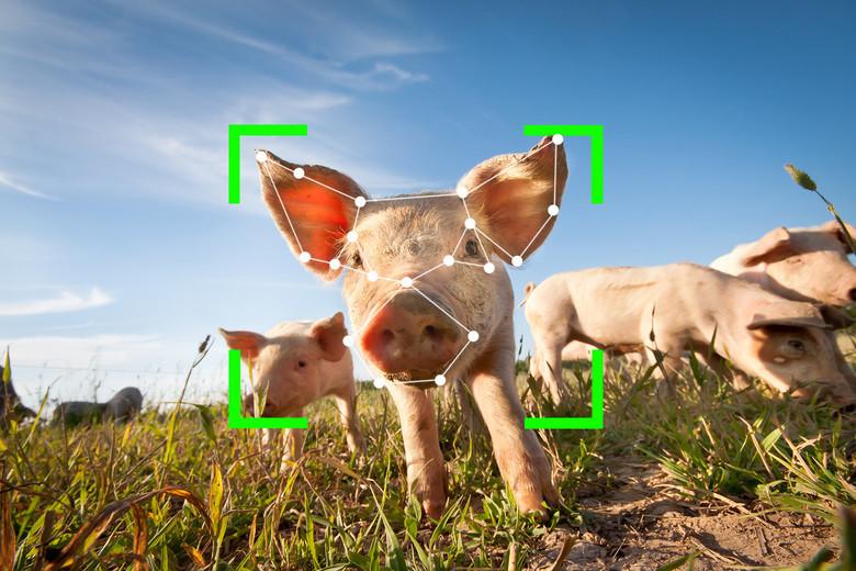 China tiene granjas donde los cerdos son monitorizados con sistemas de reconocimiento facial y de voz y alimentados por robots