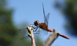 En tres décadas Alemania ha perdido el 75% de sus insectos voladores, el problema puede ser global