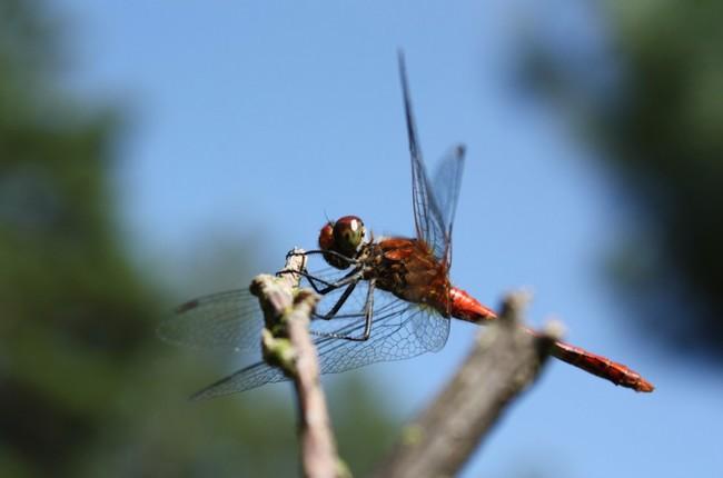 Permalink to En tres décadas Alemania ha perdido el 75% de sus insectos voladores, el problema puede ser global