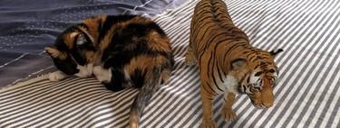 Animales 3D de Google: cómo usarlos para meter un tigre, un tiburón o un lobo en casa