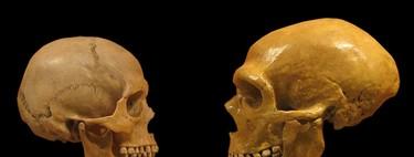 Discutiendo a Jay Gould: Lo que sabemos de los neanderthales apunta a una evolución del ser humano diferente
