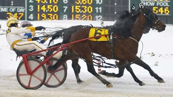 Harness driver injured in P.E.I. racing accident | CBC News